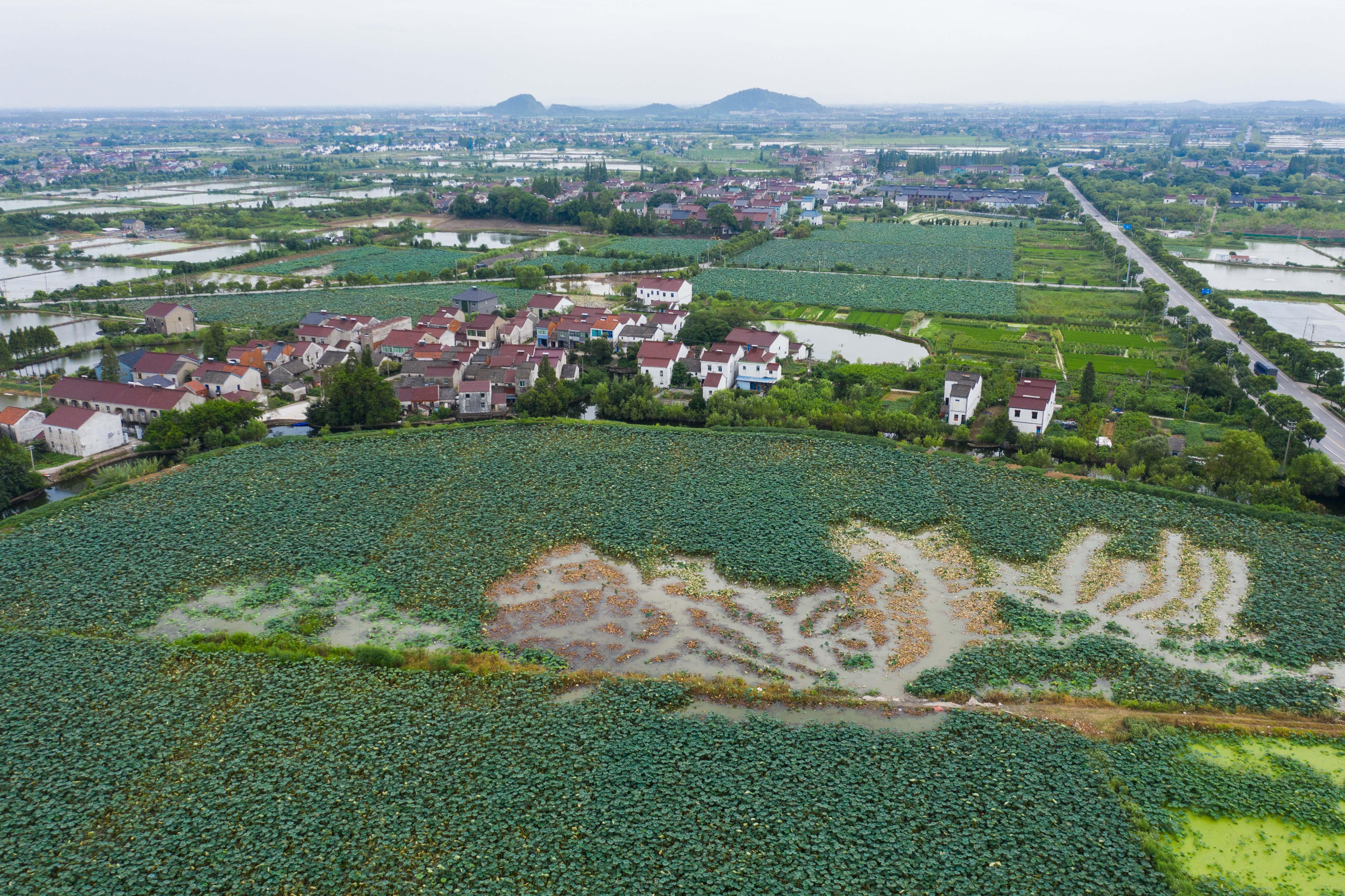 比助赢更好的计划软件_图片新闻 江南水乡收获忙